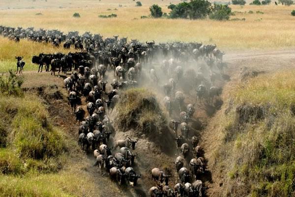 10 Day Safari to Tanzania