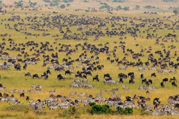4 Day Fly in Maasai Mara