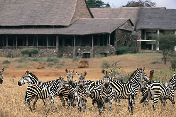 6 Day Wildlife in Kenya