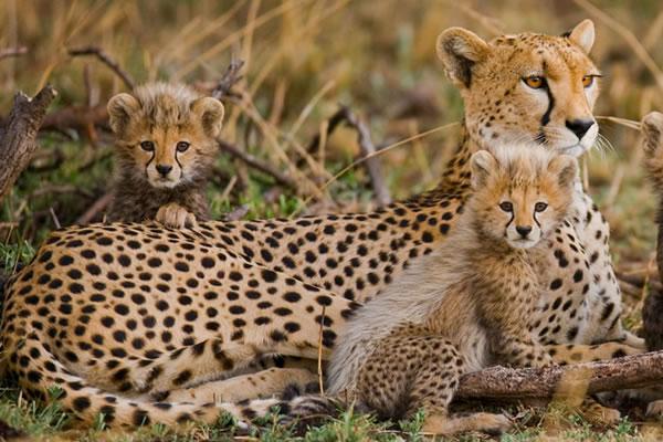 9 Day Highlights of Tanzania